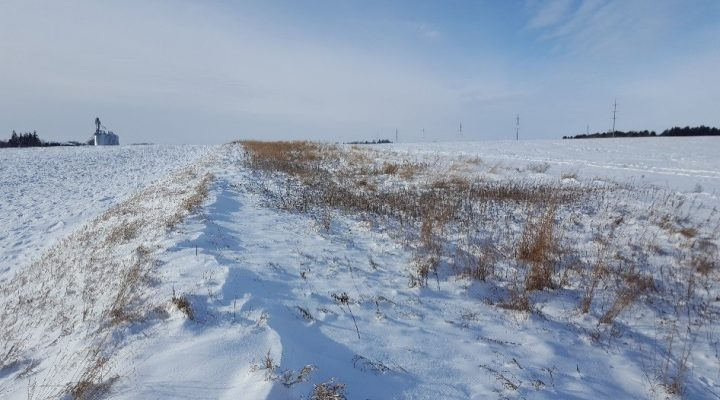 Gebhardt's conservation efforts. (Minnesota Soybean)