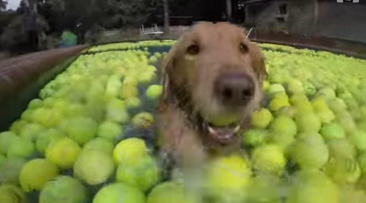 4,000 tennis balls for a very good dog