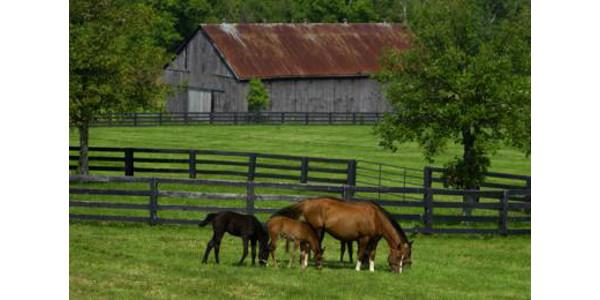 Horses grazing on pasture. (PHOTO: Matt Barton)