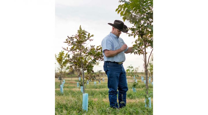 New orchards need proper design