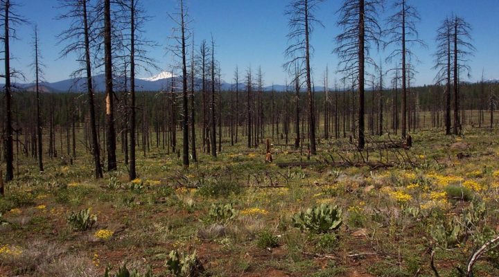 Vegetation resilient to logging after wildfire