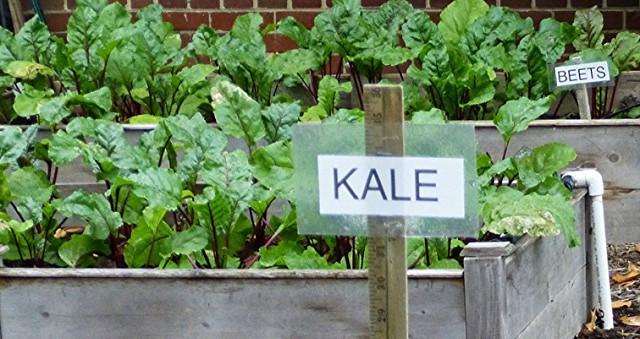Learn Grow Eat & Go Curriculum
