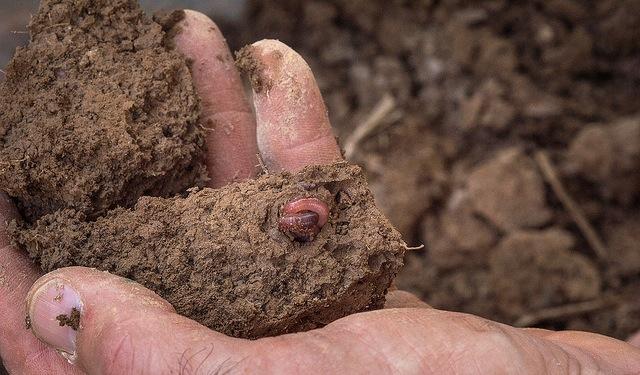 8-year survey of LA soils wraps up