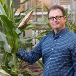 Shawn Kaeppler, UW-Madison professor of agronomy, at campus' Walnut Street Greenhouse. (Courtesy of UWMadisonCALS via Flickr)