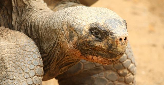 Farmer offers reward for missing tortoises