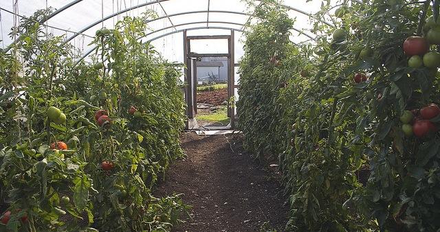 Growing veggies, preserving food