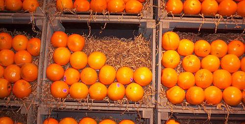 Annual Citrus Showcase, March 2