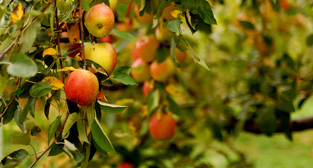 Organic Orcharding Workshop Series