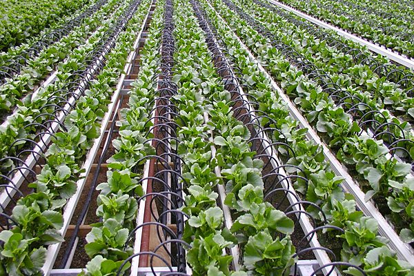 Vertical Farming Market to grow at more than 27%