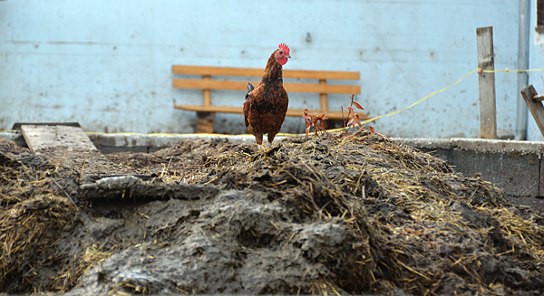 Delmarva Poultry Industry applauds new bill