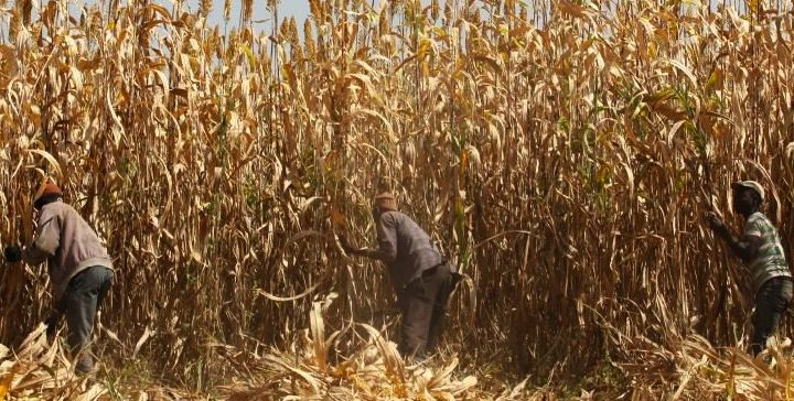 Nigeria hunger crisis deepens