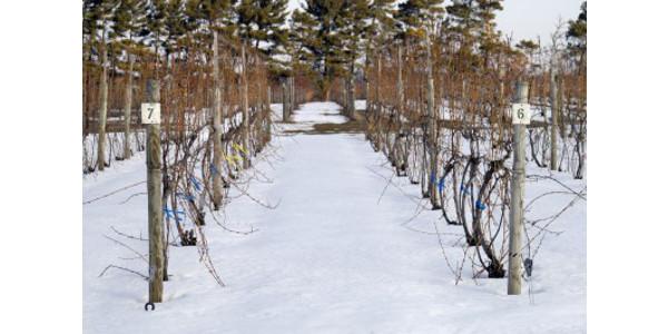 Vineyard manager survey