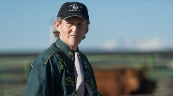 Temple Grandin, Colorado State University professor of animal sciences and world-renowned autism spokesperson, has been named to the National Women's Hall of Fame. (Courtesy of Colorado State University)
