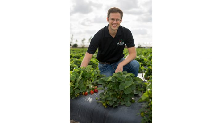Another strawberry, courtesy of UF/IFAS