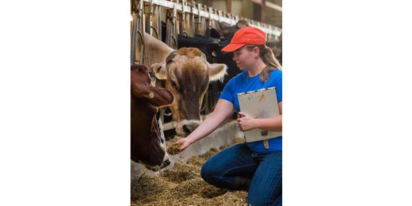 Dairy production courses will begin Fall, 2017 at NCTA. (SDSU courtesy photo)