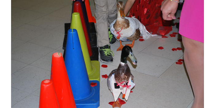 Elementary school hosts 'Duck Wedding'