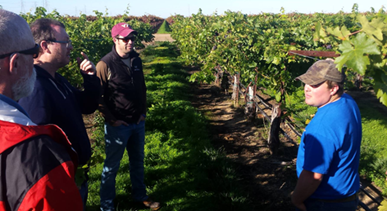 New tech for grape growers