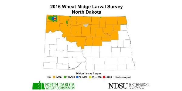 2016 Wheat Midge Larval Survey - North Dakota. (Courtesy of NDSU Extension)