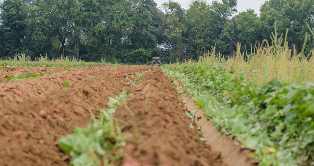 New tools help navigate crop insurance