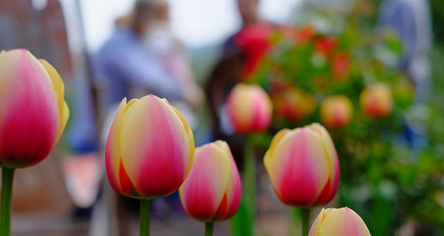 Training for Maine's horticulture industry