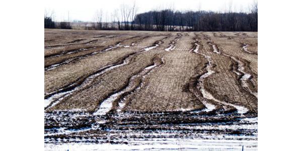 Severe harvest ruts. (Photo: Mike Staton, MSU Extension)