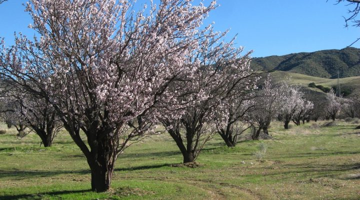 Almond Alliance opposes water proposal