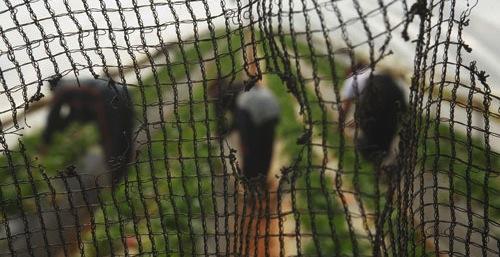 Migrant fruit pickers win court case