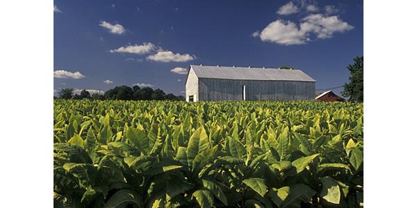 Organic field day