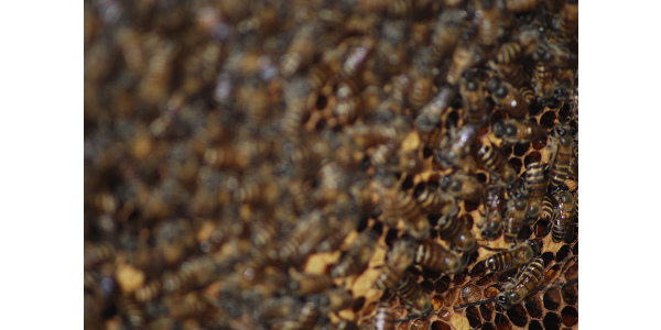 Troxler announces new beehive grant program