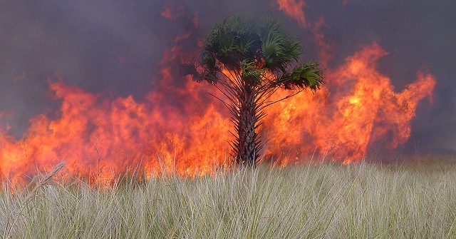 Fla. Forest Service releases app