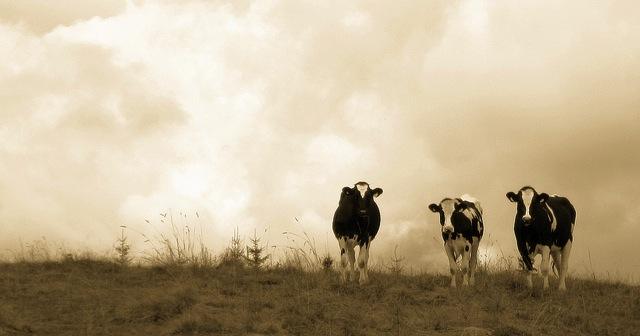 Oneida County Dairy Day