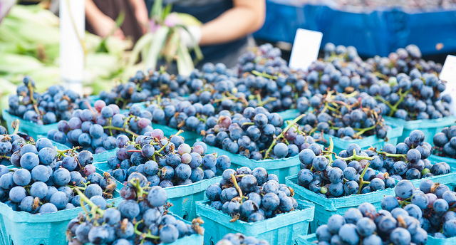 Table grape options under study