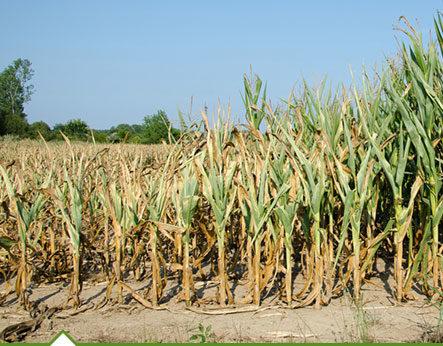 MAFC announces crop insurance deadline