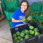 Kendra Oo inspects some gleaned produce during the summer of 2016. (PHOTO: Courtesy of Kendra Oo)