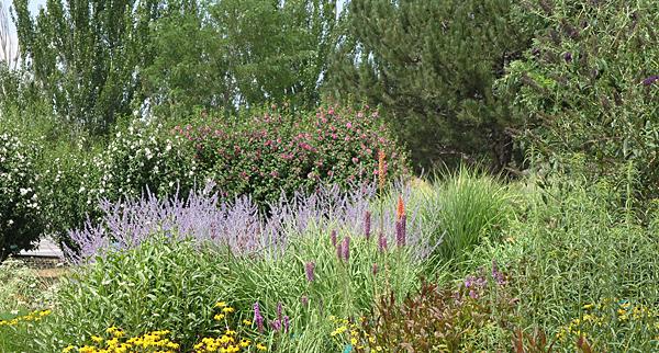 Landscape pest identification walks next week   Morning Ag Clips