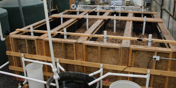 A new study shows that simple woodchip bioreactors can effectively and inexpensively remove nitrate pollution and solids from aquaculture wastewater. (Courtesy of University of Illinois)