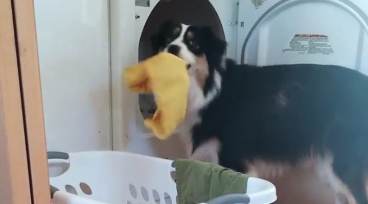 Secret, the dog of all trades