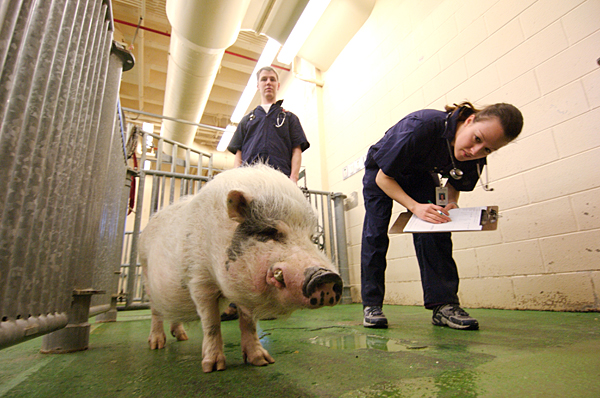4-H Veterinary Science classes to start in February