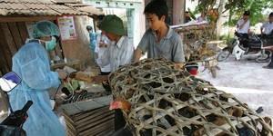 Reinforcing bird flu control efforts