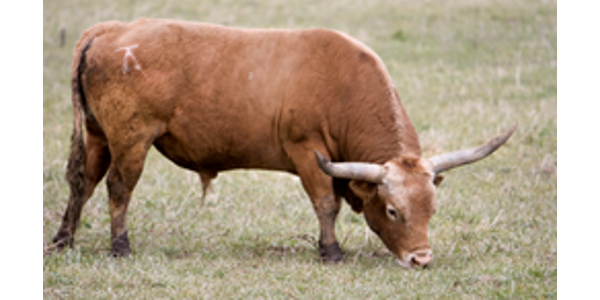 [Image: gI_61865_Kelly-Products-Livestock-Brands-1.png]