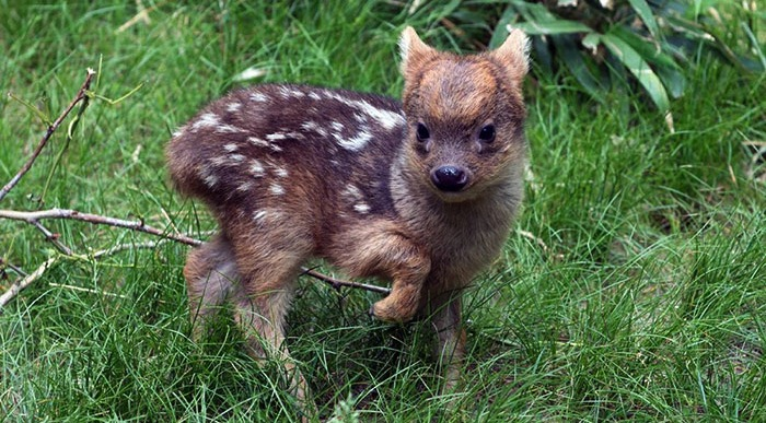 Have you seen these 20+ rare animal babies?