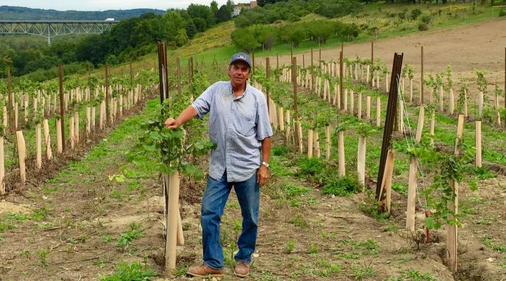 Eastern NY grape industry growing