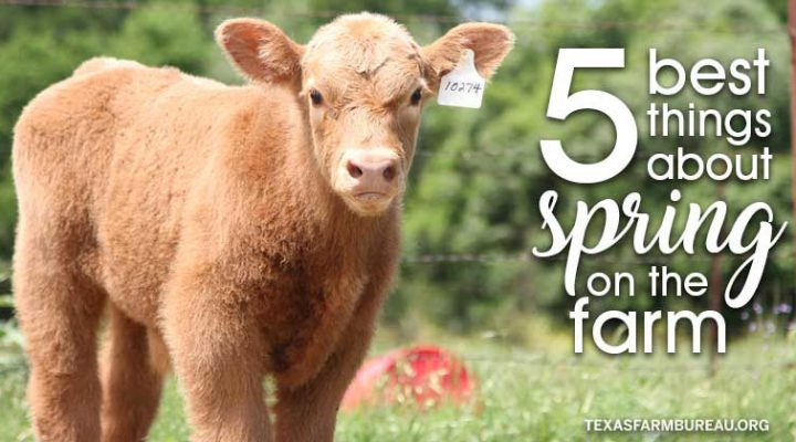 5 things to love about spring on the farm