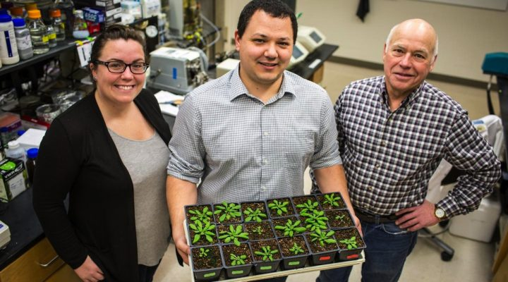 Research could save farmers millions
