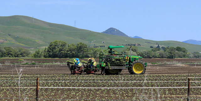 Farmers struggle to find U.S. workers