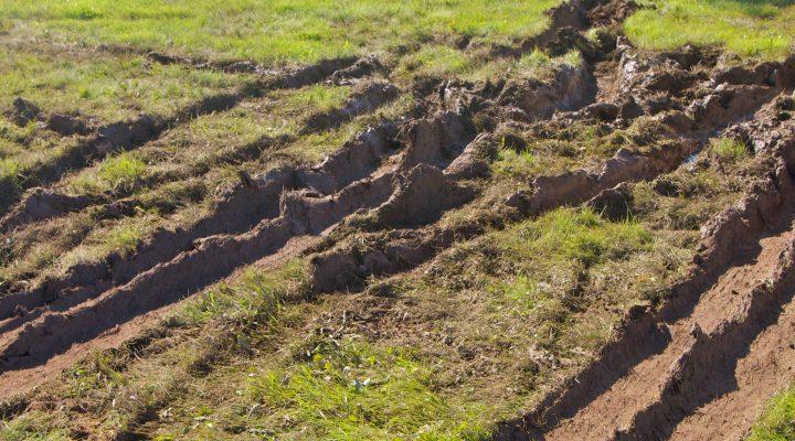 Police seek suspects who vandalized farm