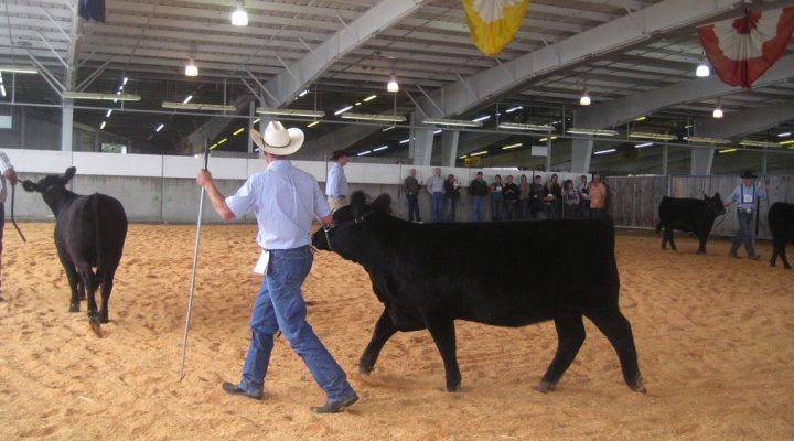 2017 National Junior Angus Show