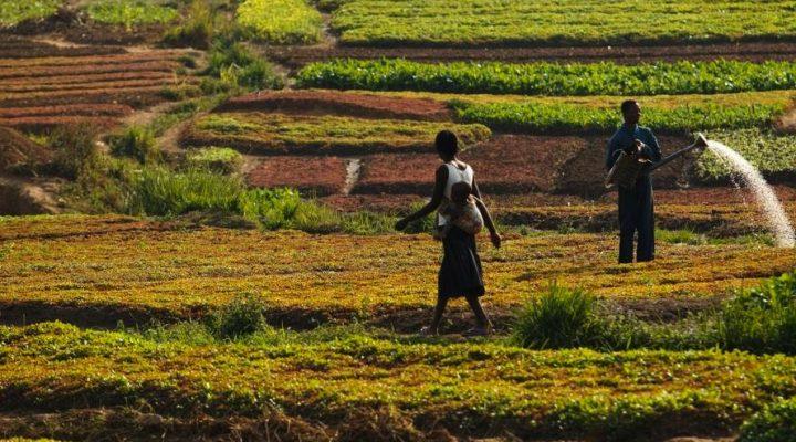 Satellites help track water productivity