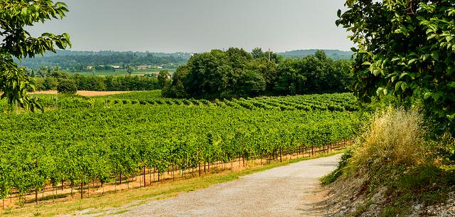 Sustainable Wine Leadership Awards