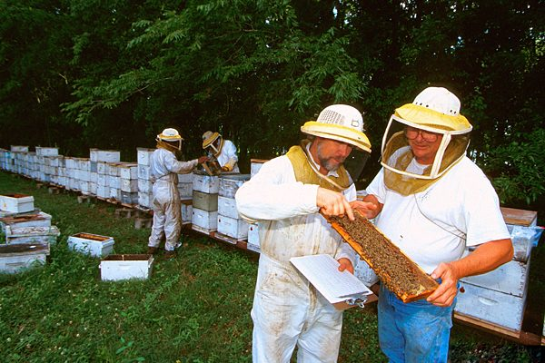 Mazzeo, Armato want beekeeping rules scrapped